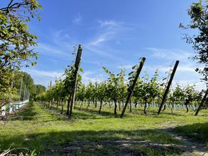 Rondleiding en wijnproeverij