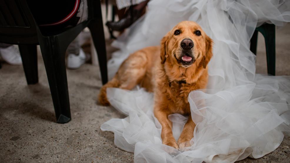Hond op de bruiloft