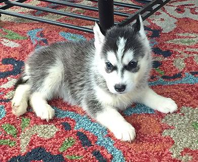 Female Puppy 5.jpg
