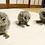 Thumbnail: メンフクロウ・ブラック(Tyto alba)