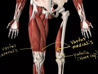 Anatomy in Yoga?
