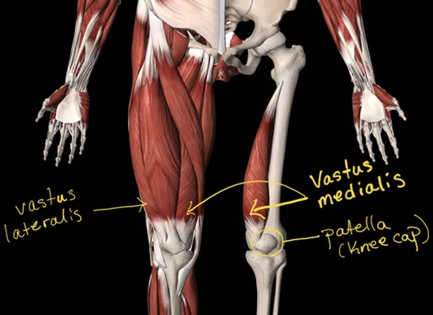 Anatomy in Yoga? | Akram Yoga: Addlestone, Weybridge / Surrey | Hot ...