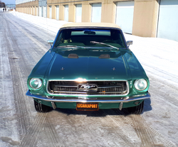 Mustang-01