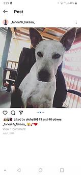 Archie ( Kelfa )