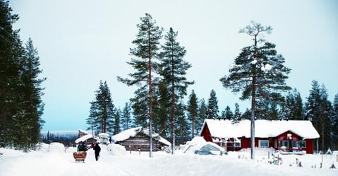 Reindeer Farm 96.jpg