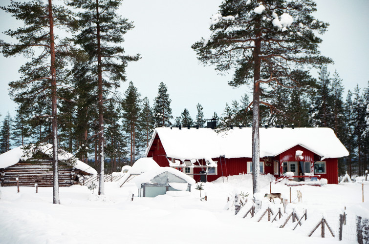 Reindeer Farm 98.jpg