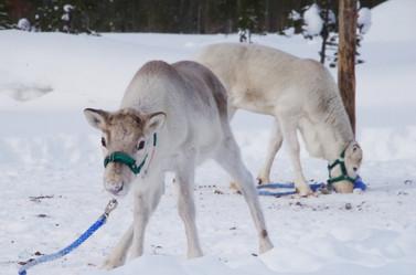 Reindeer Farm 15.jpg