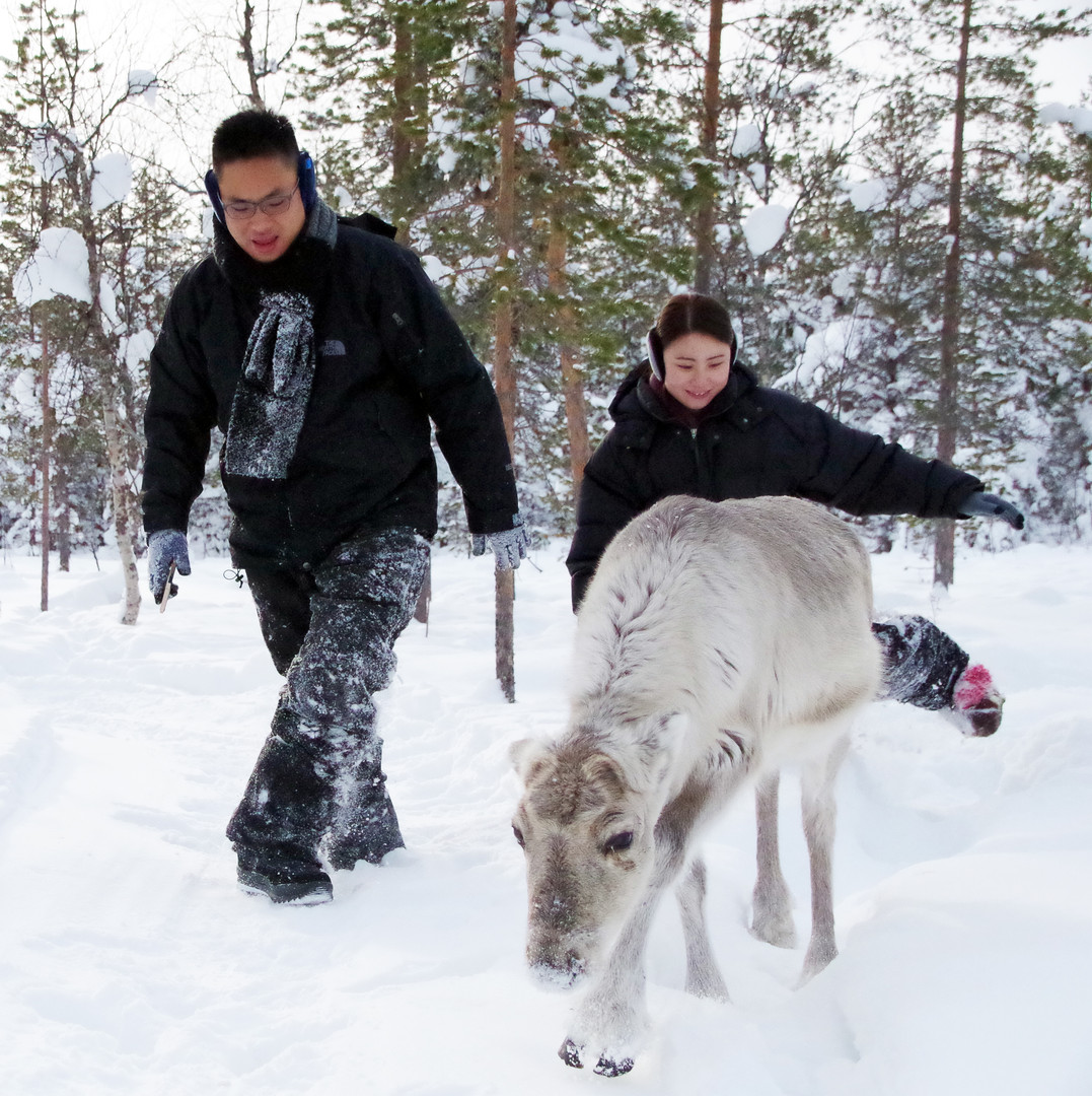 Reindeer Farm 66.jpg
