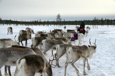 Reindeer Farm 43.jpg