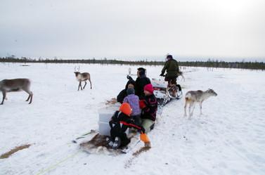 Reindeer Farm 39.jpg