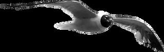 Seagull_TRNSPBG_925x300-V1_170812.png