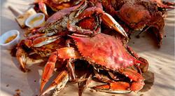 crabs_600x331