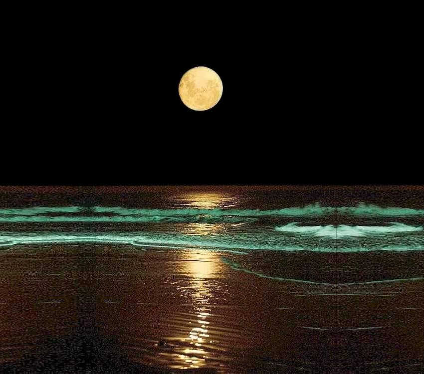 moonRising_IMG_201120