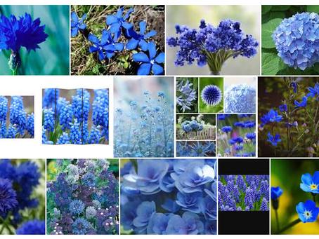 Florile anului 2020! Ce flori se vor folosi la nunți?