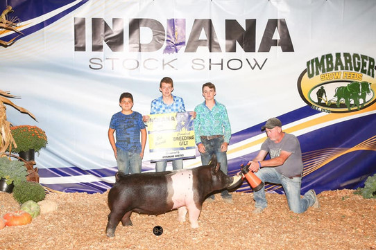 indiana stock show