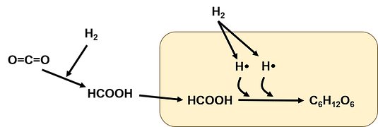 ギ酸資化菌CO2固定化.png