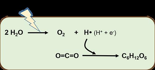 光合成のCO2固定化.png