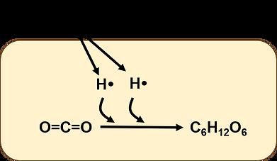 水素細菌のCO2固定化.png