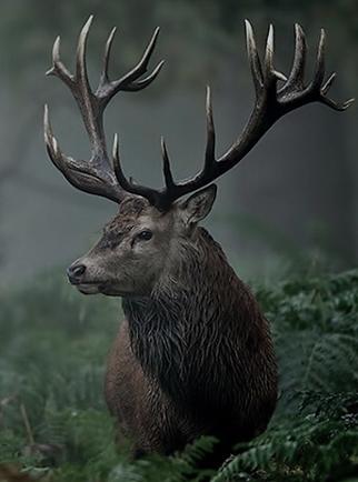 Totems, Life Rebel, Deer
