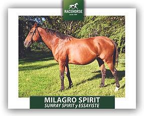MILAGRO SPIRIT-1.jpg