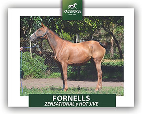 FORNELLS.jpg