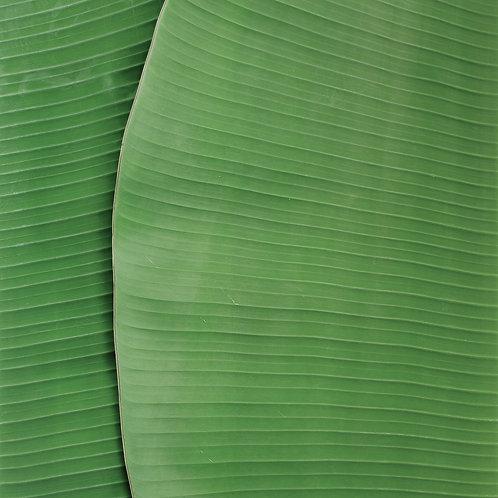 Folha de bananeira orgânica