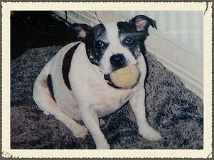 Dog Trainer Bush Hill Park, Dog Trainer Enfield, Puppy Trainer Enfield