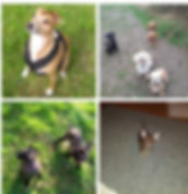 121 Puppy Training & Dog Training
