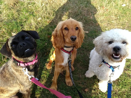A Guide to Dog Walking...& the Importance of