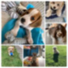 121 Dog Training with Faith