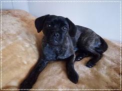 Dog walker Winchmore Hill, Dog Walker Enfield, Puppy Walker Enfield