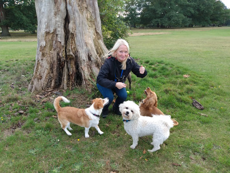 Dogs - Calming Signals & Body Language