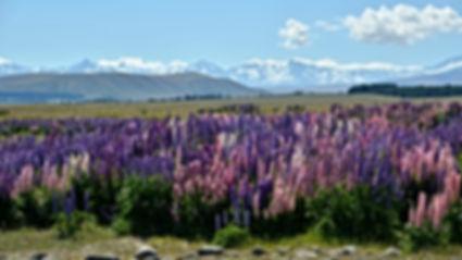 Frühling in Neuseeland