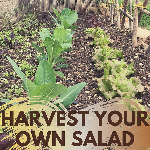 Harvest your own salad!