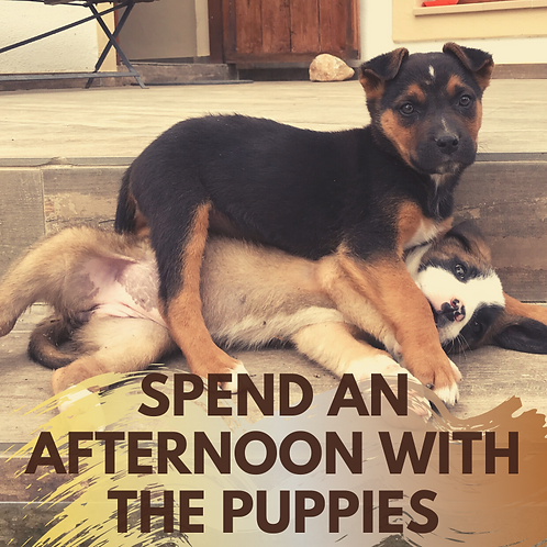 Spend an afternoon with the puppies!