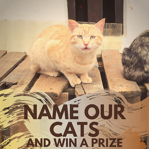 Name all our cats and win a prize!