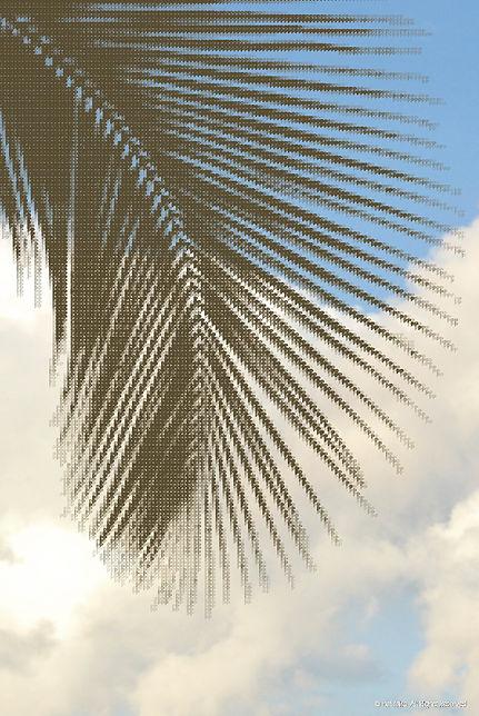 palmtree_color.jpg