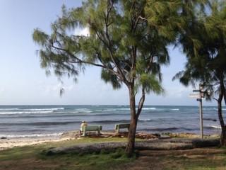 Surf Barbados: Zed's Surfing Adventures
