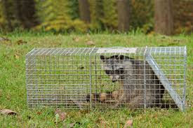 Humane Trapping & Reclocation