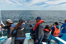 ballena gris3.jpeg