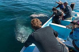 ballena gris1.jpeg