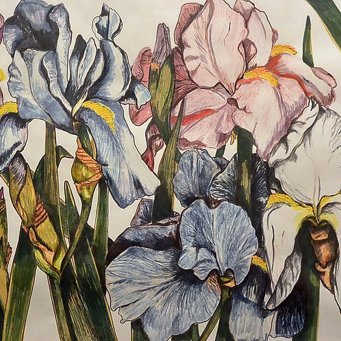 "Irises (10"" x 18"") Giclee Reproduction"