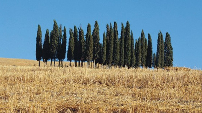 Q.I. @ Paesaggi Musicali Toscani