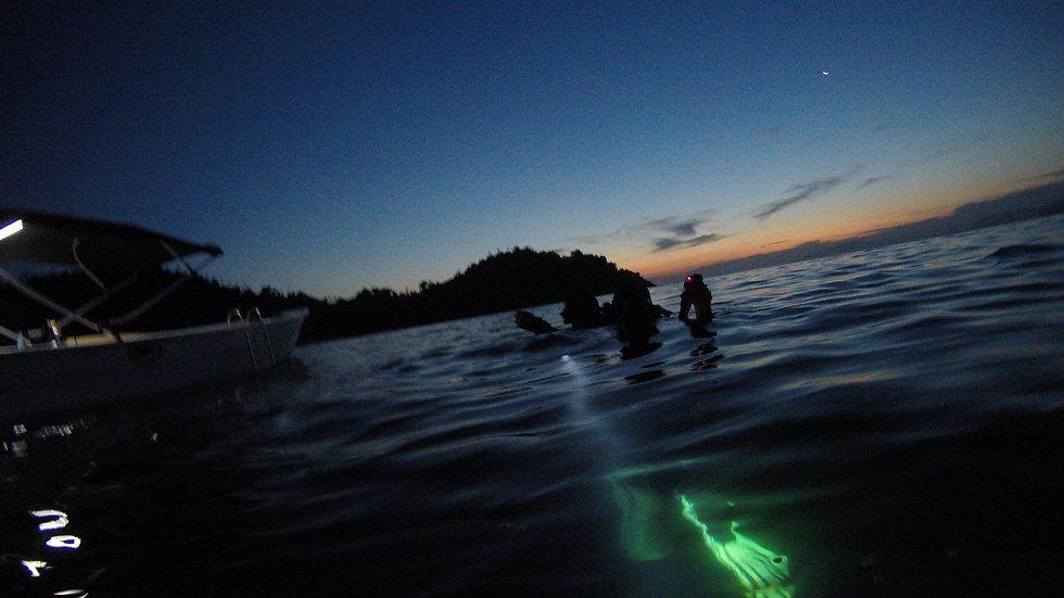 Night Dive at Jorge Grego island.JPG