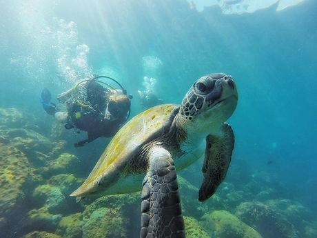 Diver.jpeg