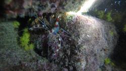 siri aranha jorge grego mergulho