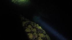 Night dive ilha grande jorge grego