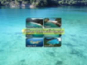 Ilhas celular.PNG