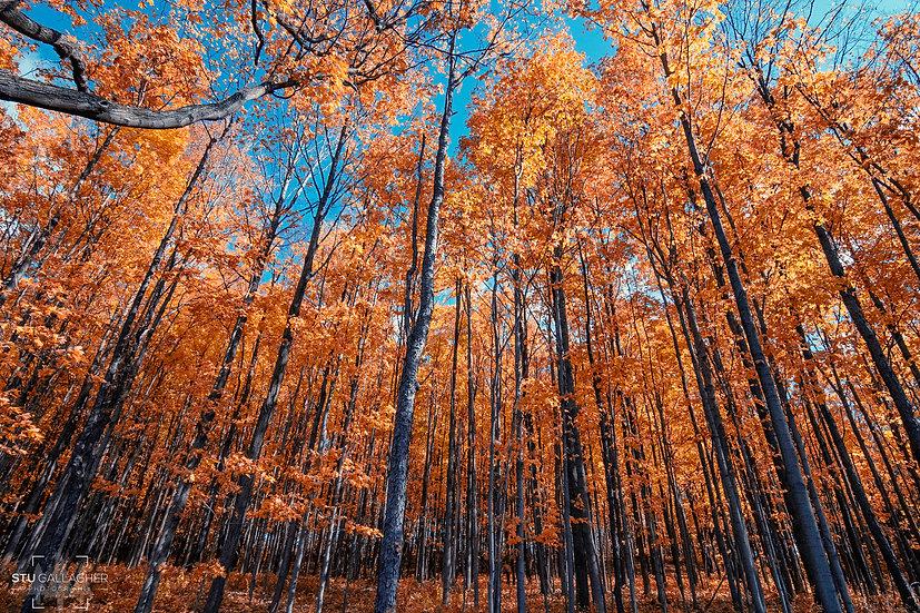 Vineyard Forest