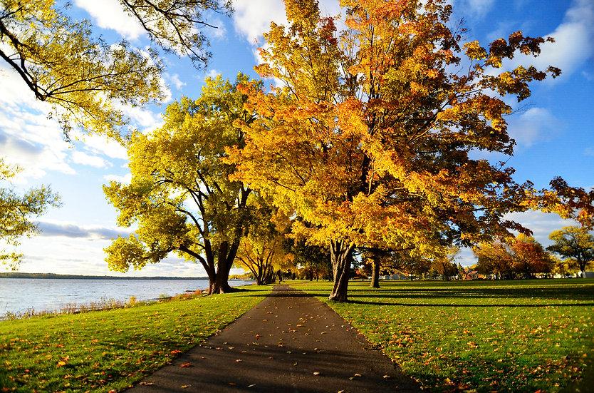 onondaga lake park, autumn trees, syracuse photographer
